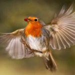 Balade ornithologique (lundi 12 mars)