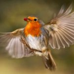 Balade ornithologique du 26 mars