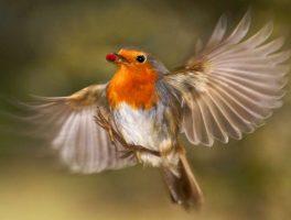 Balade ornithologique