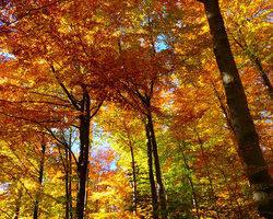 Photos arbres